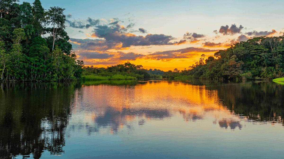 20 photos of the Amazon
